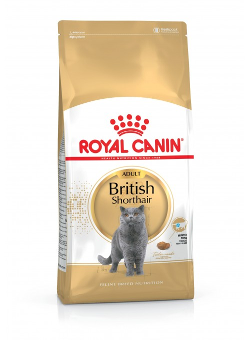 Royal Canin British Shorthair-RCBRISHO2