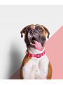 Zee.Dog Coleira Pink Skull-ZDCOLLAR29 (3)