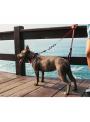 Zee.Dog Coleira Cadillac-ZDCOLLAR41 (3)