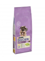 Dog Chow Senior Frango-DC33150