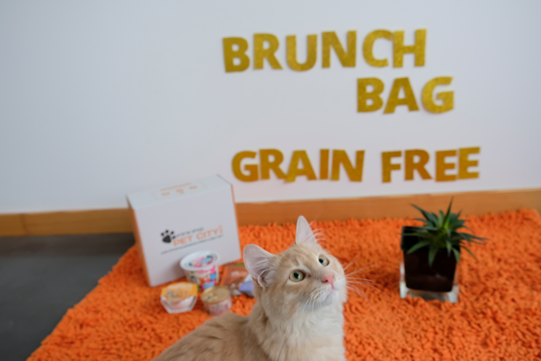 BRUNCH-GRAINFREE-CAT.jpg